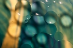 Olejové bubliny 4