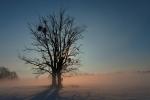 Stromy v mlze