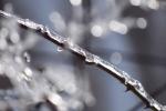 Z alba Zimní poetika